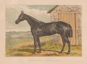 "Miles: Hunter Glengarry. 1895. An original antique chromolithograph. 11"" x 8"". [FIELDp1582]"