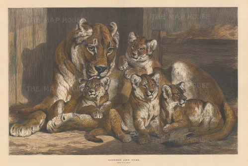 After a drawing by Samuel Carter, the prominent natural history artist.