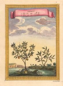 "Bellin: Cinnamon & Tea Tree. 1748. A hand coloured original antique copper engraving. 6"" x 8"". [NATHISp7134]"