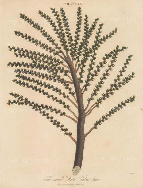 Branch of the tree. Engraved by John Pass.
