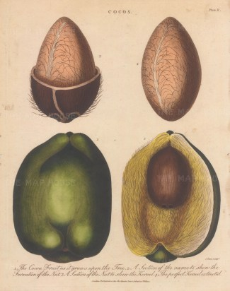 Four details of the husk, shell, and coconut fruit. Engraved by John Pass.