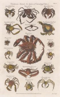 Seventeen varieties of crab.