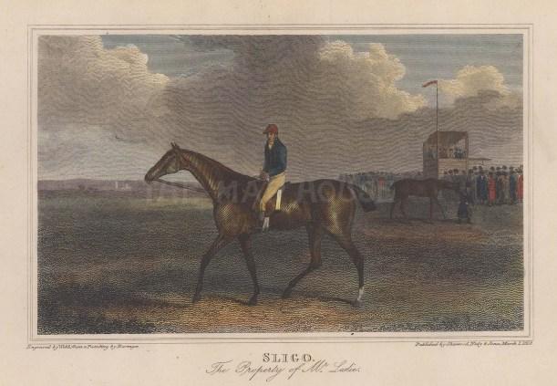 """Scott: Sligo. 1818. A hand coloured original antique steel engraving. 6"""" x 4"""". [SPORTSp3425]"""