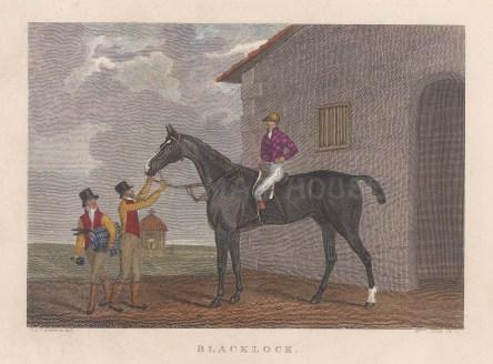 "Pittman: Blacklock. 1822. A hand coloured original antique steel engraving. 6"" x 5"". [SPORTSp3469]"