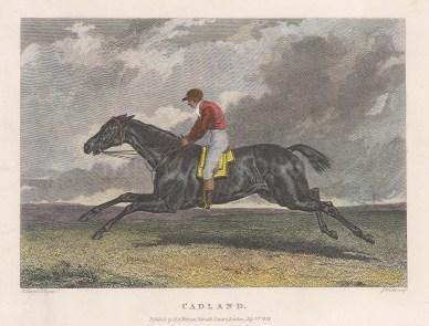 Winner in 1828 of the 2000 Guineas, Epsom Derby, Newmarket St Leger and Grand Duke Michael Stakes.