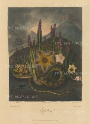 Dewy, Hirsute and Bell-shaped with snakes and a lizard set in an African landscape with an erupting volcano.