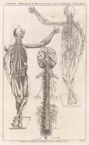 Central Nervous System: Anterior view of male figure with detail of nerves, and the spine and brain.