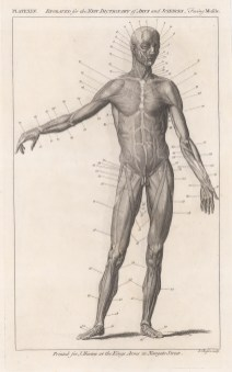 Myology: Anterior view of male figure.