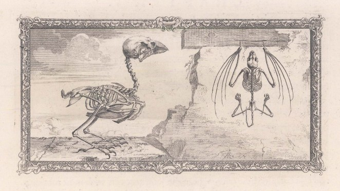 Animal Anatomy: Skeletons of a Sparrow and Bat with a decorative border.