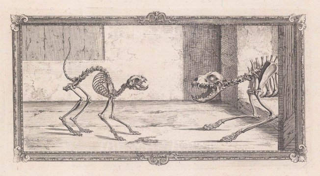Animal Anatomy: Skeletons of a Cat and Dog with ornate border.