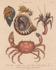 Crab: Soldier Crab, Hermit Crab and Land Crab.