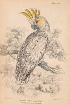 "Jardine: Lesser Sulfur crested Cockatoo. 1843. An original hand coloured antique lithograph. 6"" x 4"". [NATHISp8146]"