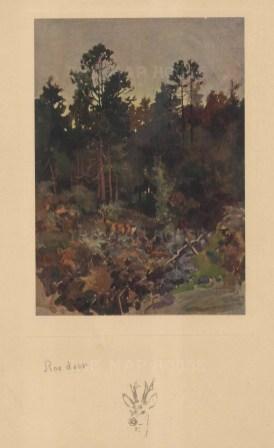 Deer: Roe Deer in the woods.