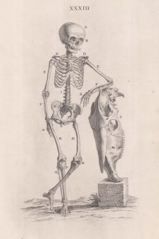 Skeleton of child with the skull of a horse. With key.