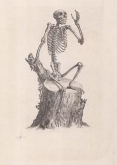 Animal Anatomy: Chimpanzee.