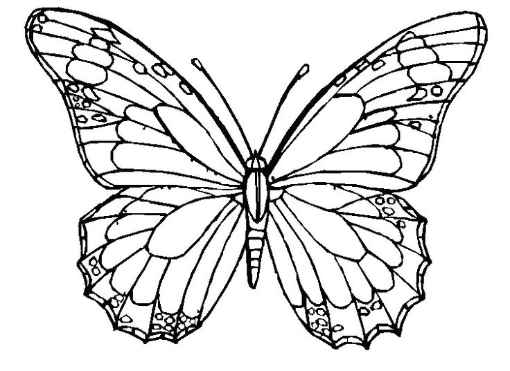 common worksheets butterfly pics to color butterfly coloring sheets butterfly flower coloring how different