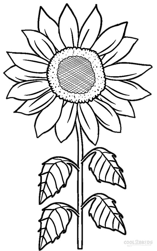 Tall Flower Vase Cartoon