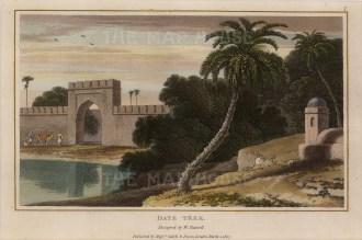 Daniell: Date Tree, 1807. An original aquatint. 8 x 5 inches. [NATHISp6780]