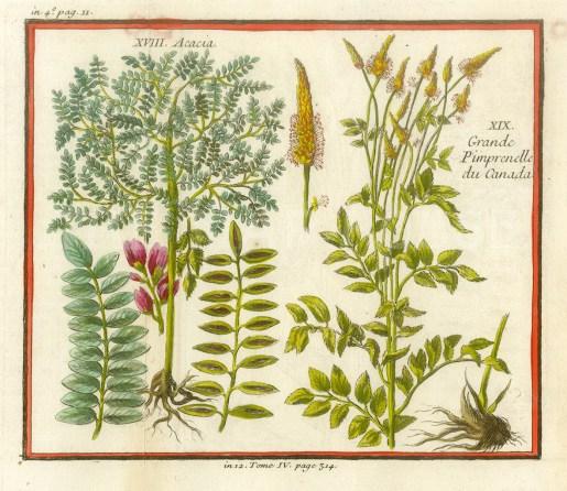 "Bellin, 'Acacia, Grande Pimpernelle du Canada', 1753. A hand-coloured original copper-engraving. 5"" x 7"". £POA."