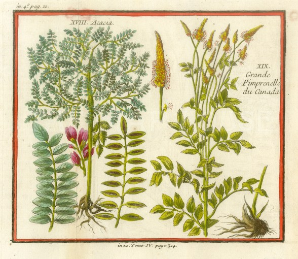 "Bellin, 'Acacia, Grande Pimpernelle du Canada', 1753. A hand-coloured original copper-engraving. 5"" x 7"". £POA."