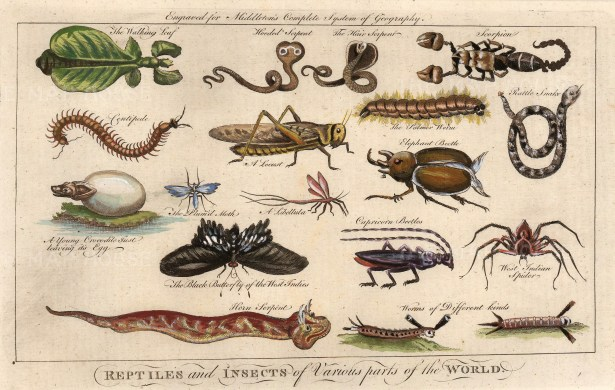 Moll: Reptiles and Insects, c.1745. A hand-coloured original copper-engraving. 11 x 8 inches. [NATHISp6562]