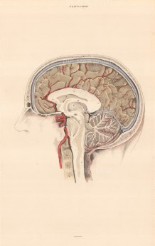 """William Home Lizars, Cross-section of the brain. Plate LXVIII. c.1822. An original colour steel-engraving. 10"""" x 17"""". £POA."""