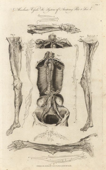 Charles Cooke, 'Absorbent Vessels - The System of Anatomy [Lymphatic System]', 1789. An original copper engraving.