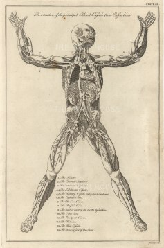 Dr Mortherby, Blood Vessels, 1775. An original copper-engraving. 7 x 12 inches. [NATHISp7289]