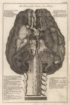 """Dr Mortherby, 'The Basis of the Brain from Ridley', 1775. An orignal copper-engraving. 7"""" x12""""."""