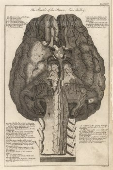 Dr Mortherby, The Brain, 1775. An original copper-engraving. 7 x 12 inches. [NATHISp7295]