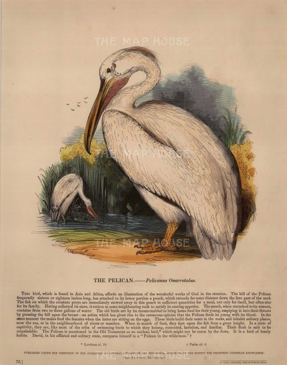 The Society for the Promotion of Christian Knowledge: Pelican. c.1860. A hand-coloured original wood-engraving. 11 x 13 inches. [NATHISp6899]