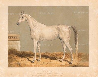 "General Tweedie: Arabian Horse. 1894. A rare original chromo-lithograph. 10"" x 7"". [NATHISp7170]"