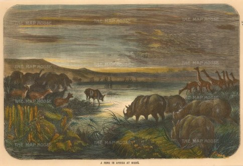 Collins: Animals of South Africa. Circa 1870. A hand-coloured original antique wood-engraving. 10 x 6 inches. [AFRp1307]