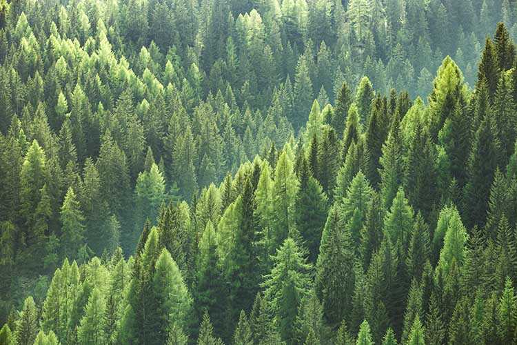Sustainable Forestry