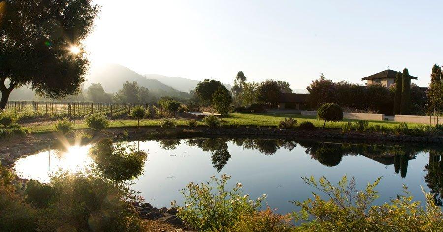 Landmark Vineyard Pond