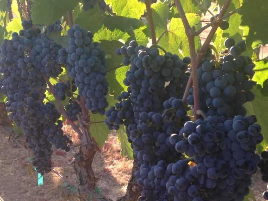 H-G Vineyards
