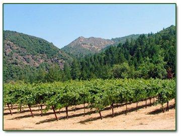 Albertina Wines Vineyards