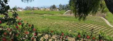 bel-vino-vineyard