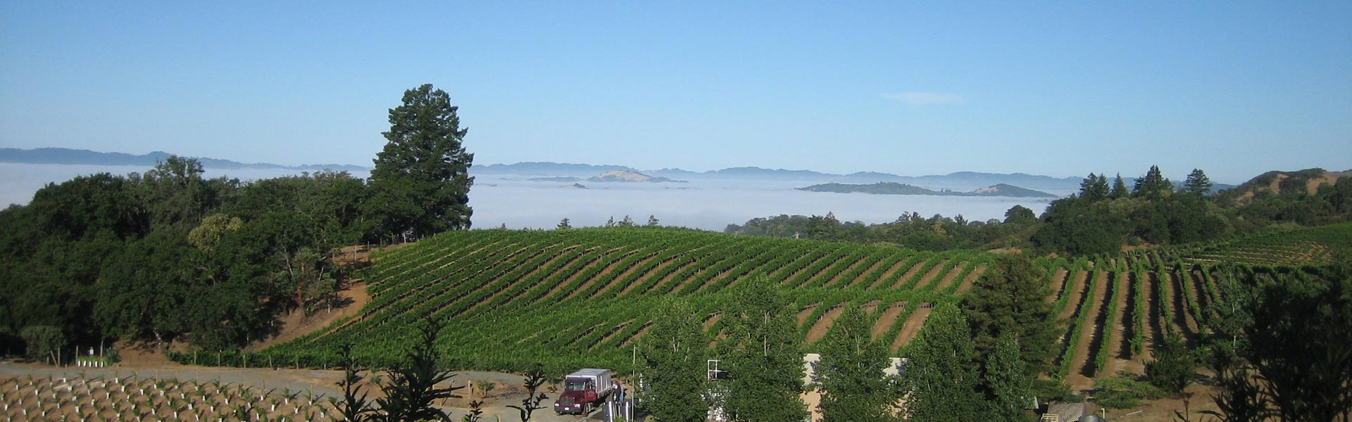 Sky Pine Vineyards and Bobdog Wine