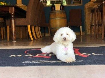Maudy- Winery Dog