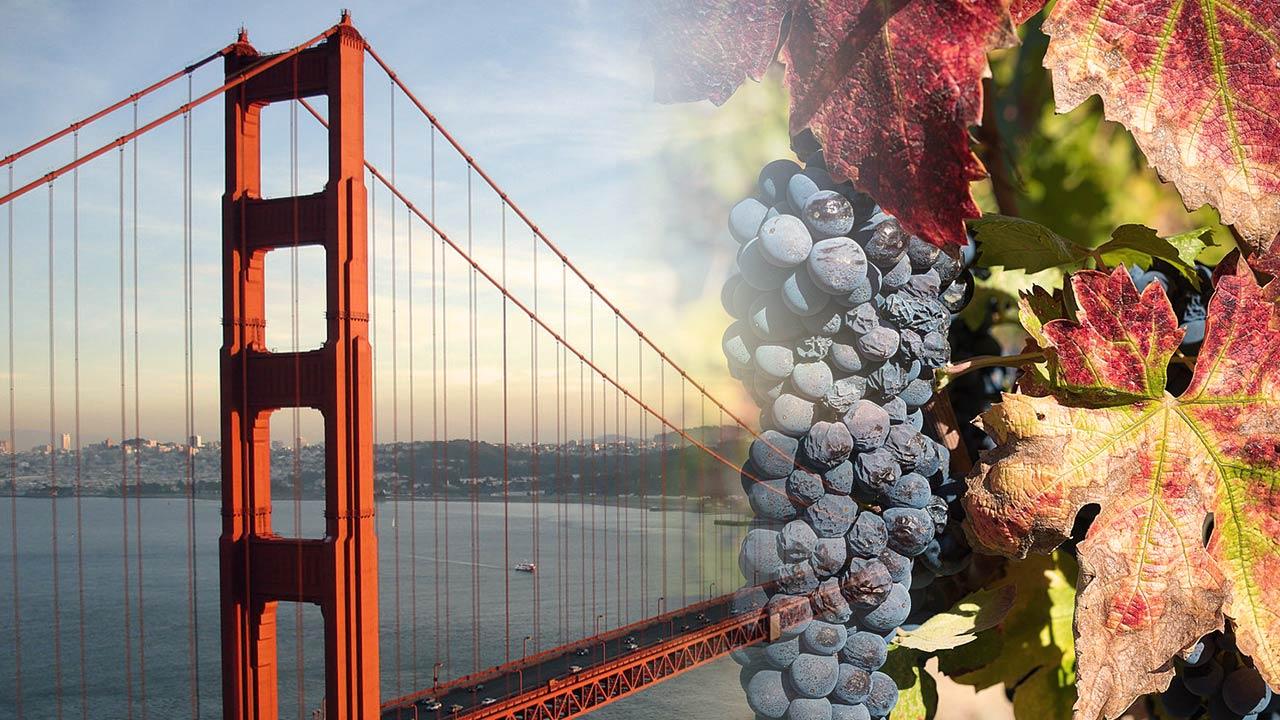 Zinfandel Wine Tastng Trip in California
