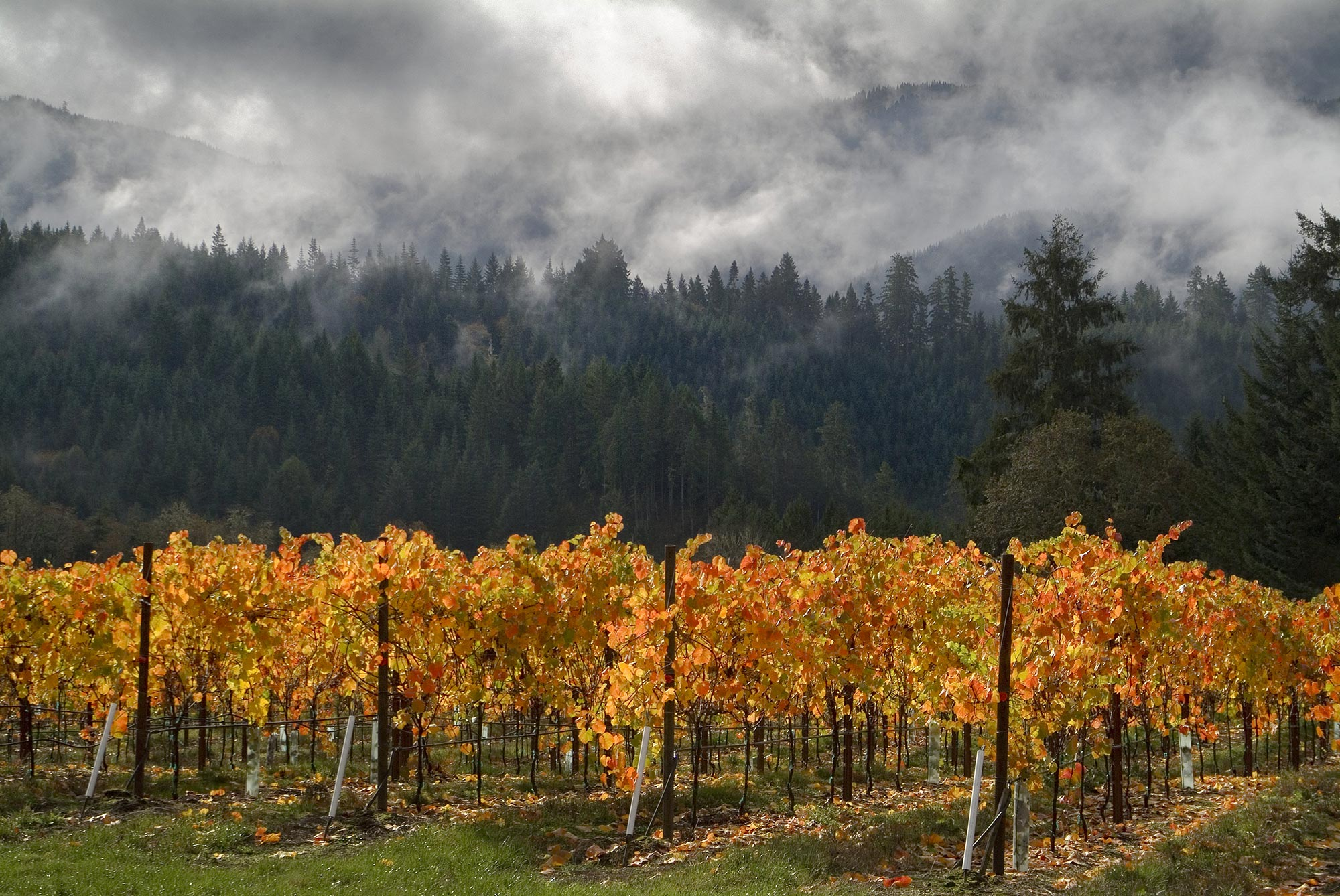 Brandborg Wines