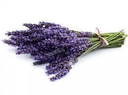 Lavanda . Etericno ulje lavande je odlican prirodni lek za lecenje opekotina, protiv uboda insekata a izuzetno povoljno deluje na nervni sistem