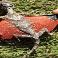 Dragão Descoberto na Indonésia?