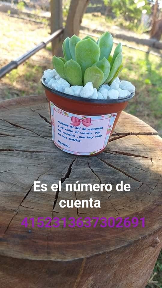 María Fernanda: La niña que vende plantas para pagar su tratamiento contra el cáncer