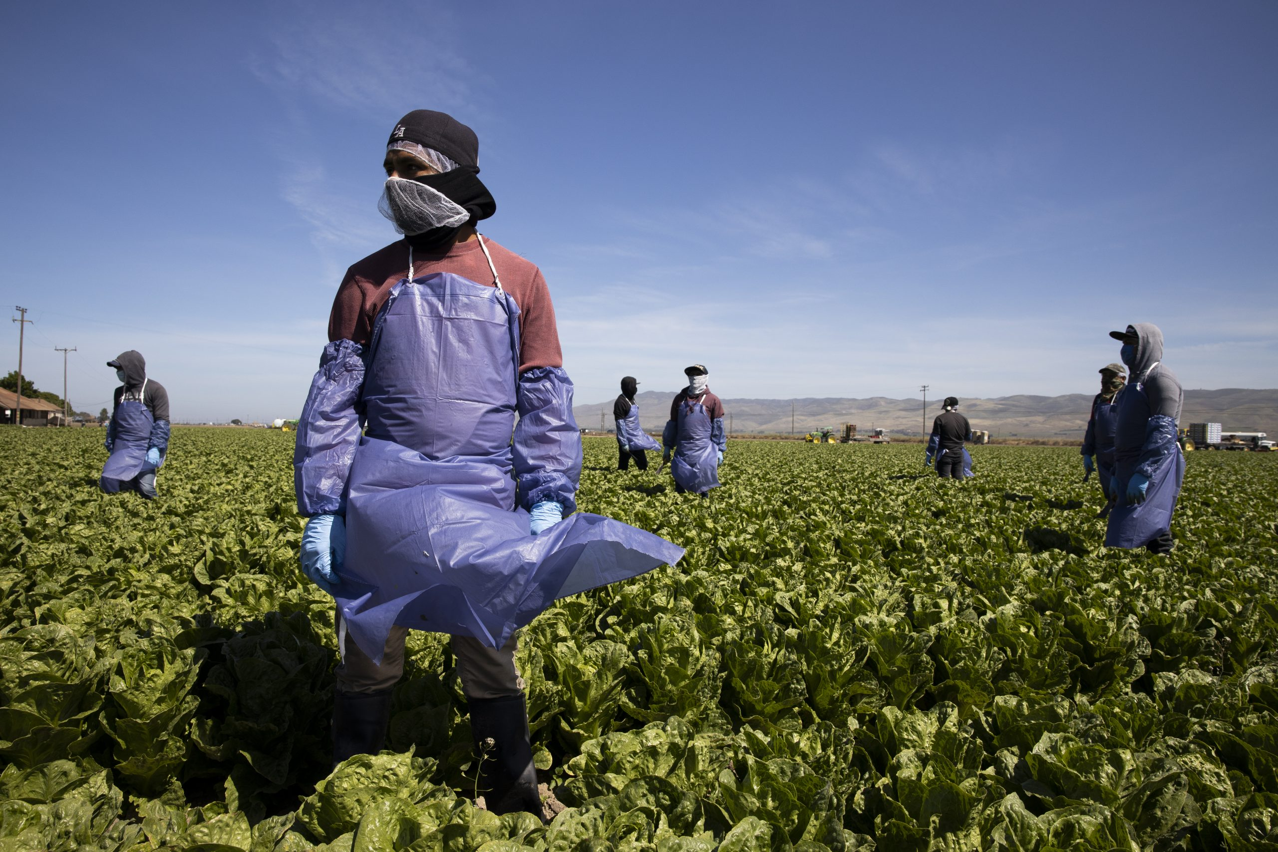 Patchwork of bills and proposals leaves most undocumented frontline workers unprotected - Prism