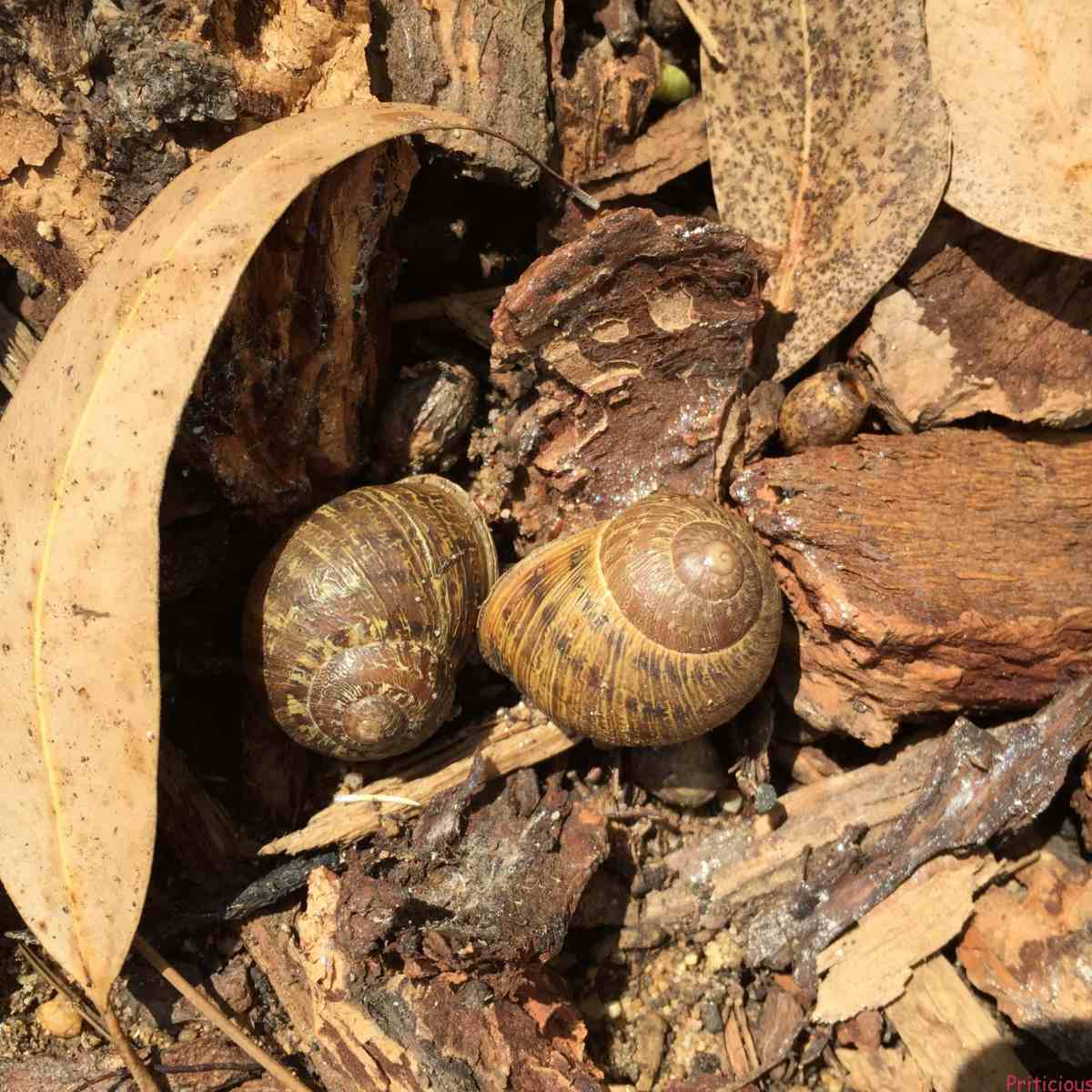 How to prevent slug and snail in the garden