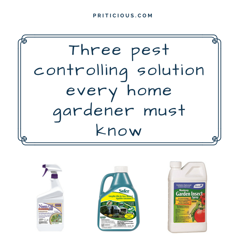 Three pest controlling solution every home gardener must know