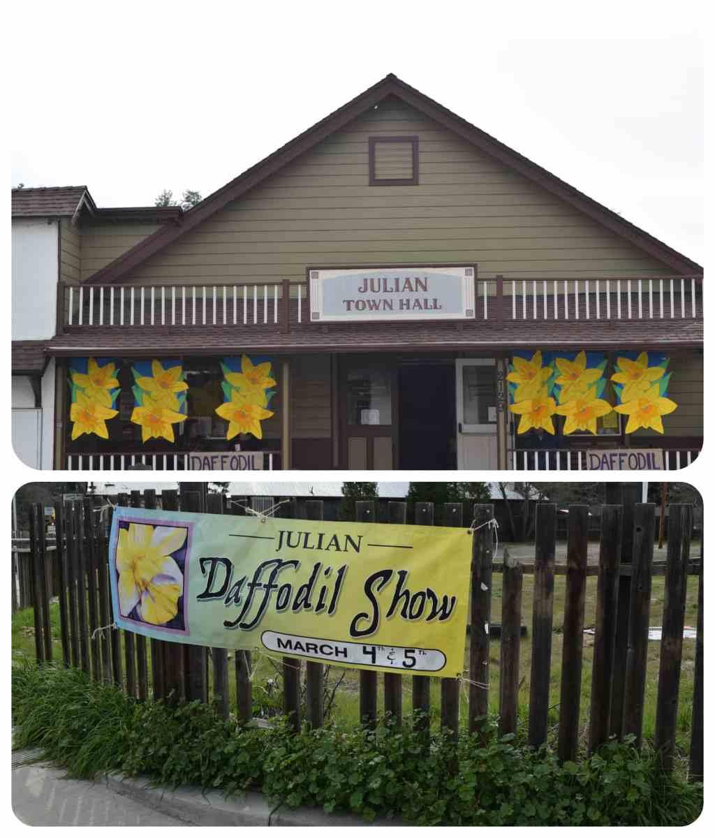 Julian Daffodil Show - CA