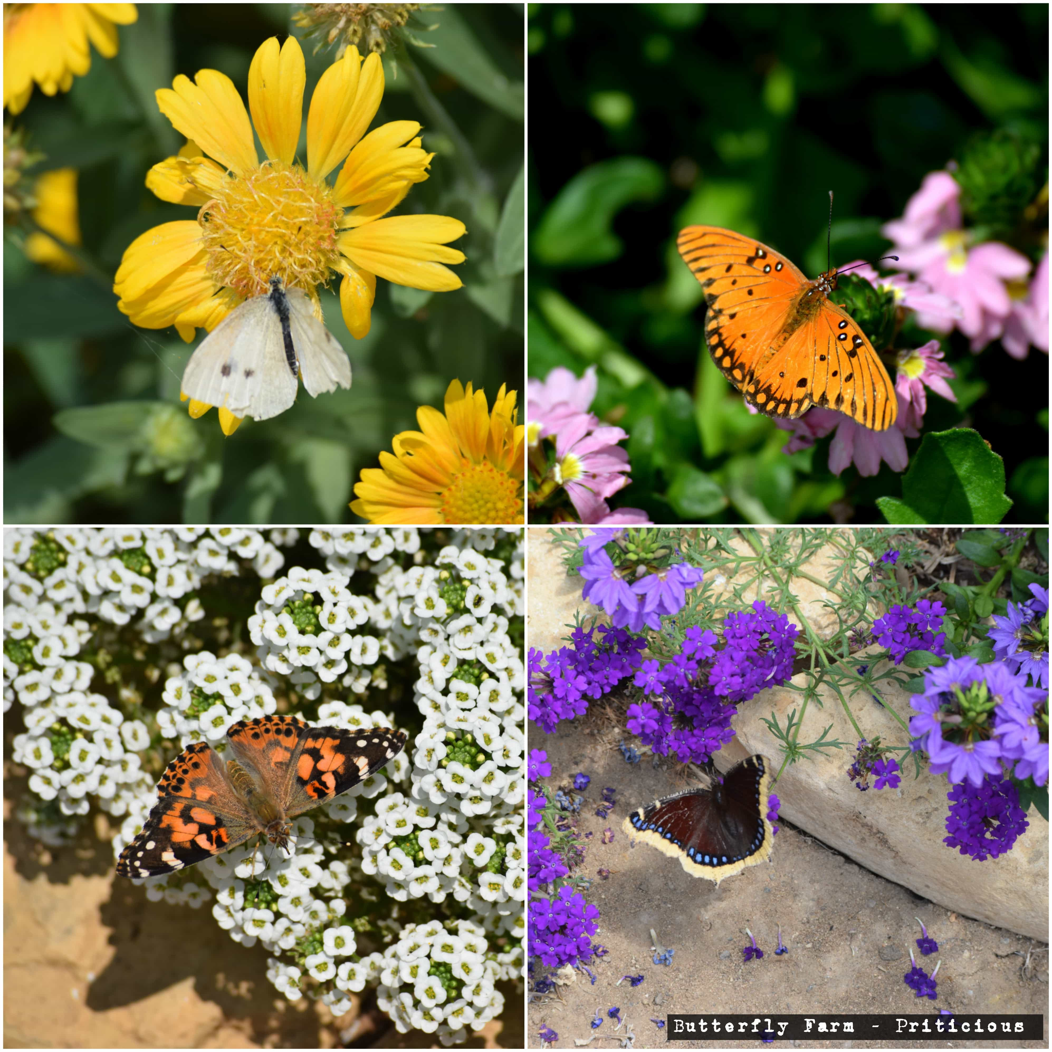 Priticious Blog For Gardening Craft And Hobbies